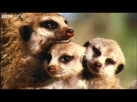 What A Wonderful World With David Attenborough -- BBC One [FULL HD]