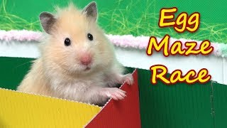 Hamsters Escape from Egg Maze - Hamster Race!