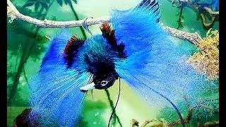 Tổng hợp những loài chim đẹp nhất thế giới (P1)