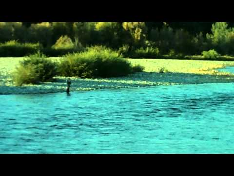 YUBA RIVER - TROUT - NOVEMEBR 2012