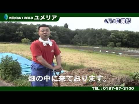 秋田県でカブトムシを捕まえよう!