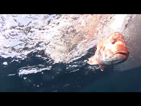 Offshore Kayak Fishing (Red Snapper): The Hype. The Humility. The Haul.