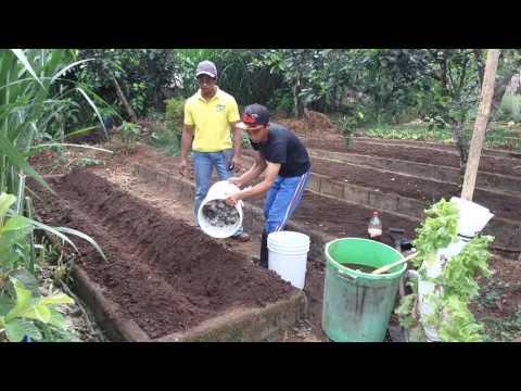 Application of Kitchen Waste Compost upon land preparation as Basal Fertilizer
