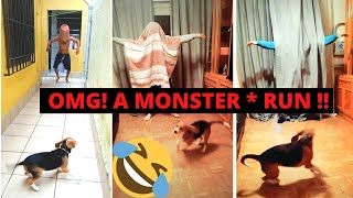 #DogScareChallenge | Funny Dog New Tik Tok Video | You CANNOT Stop Laughing 🤣🤣 | Banger Tiktok