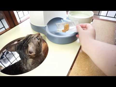 はじめてのおやつを食べる猫