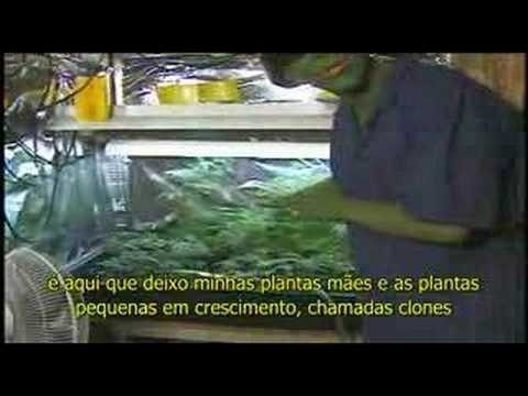 I GROW CHRONIC - PART 1 (legendado)