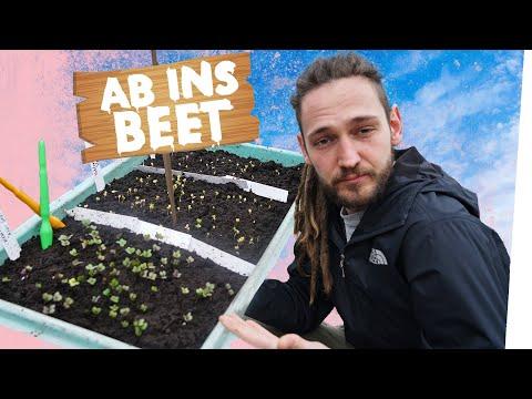 Pikieren Von Pflanzen Und Gemüse | Kliemannsland Garten