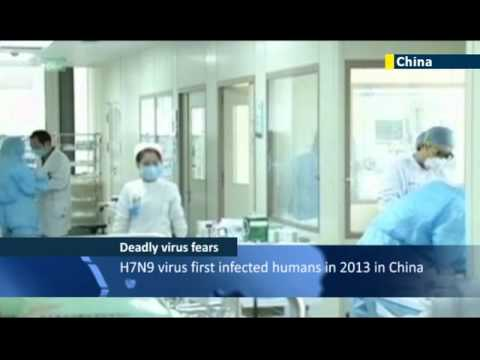 Human transmission of bird flu raises fears over pandemic risk posed by potentially deadly virus