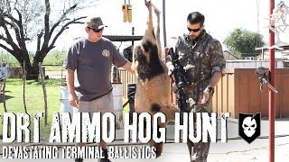 Hog Hunting with DRT Ammo and Devastating Terminal Ballistics