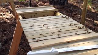 Action plan: Working our Africanized Top Bar Honey Bee Hive