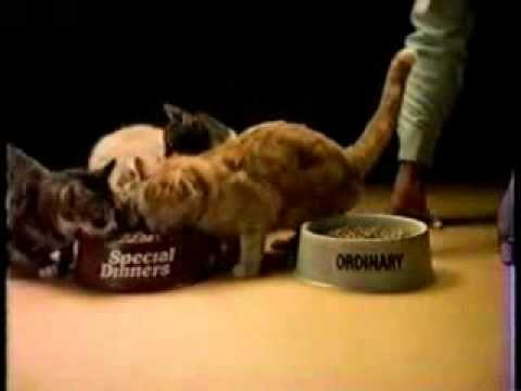 Special Dinners Cat Food Commercial