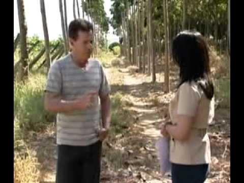 Mogno Africano   Reportagem exibida no programa Globo Rural