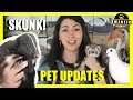 Meet My Skunk Animal Updates Grinchy Ferrets And Doves mp3