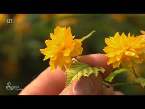 Doku - Der Bienenfreundliche Garten