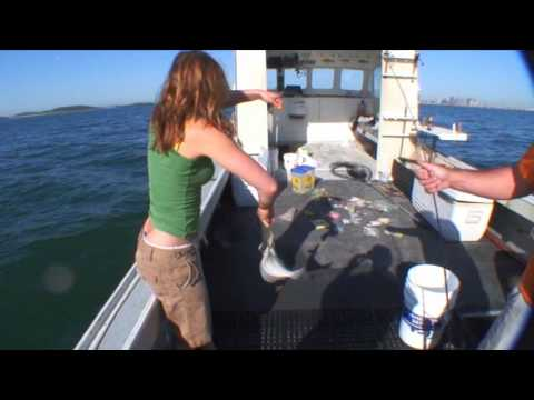 Flounder Fishing Boston Harbor - Boston Sportfishing