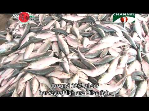 Nature and Life - Episode 193 (Marine Fish Resources)