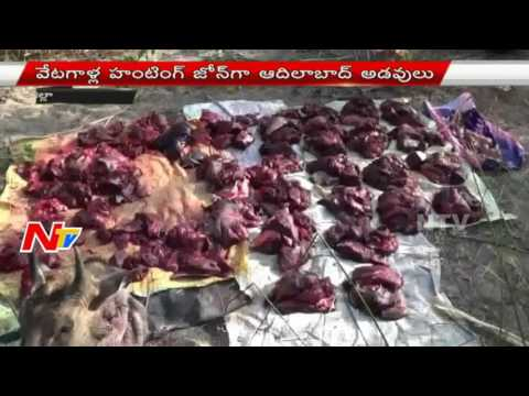 Adilabad Forest Turns As Hunting Zones