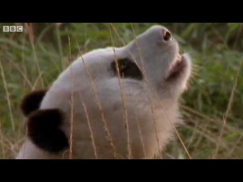 funny-animals-talking-for-sport-relief-walk-on-the-wild-side-bbc-sport-relief-night-2010.html