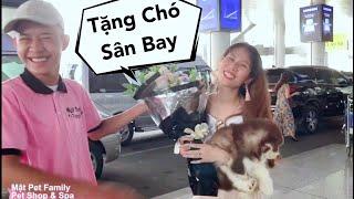 Ra Sân Bay Tặng Chó Cho Chị Mới Về Nước - Best Lãng Mạn - Mật Pet Family ^^
