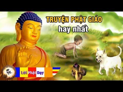 Nghe Câu Truyện Phật Giáo Này KHÓC KHÔ NƯỚC MẮT Quá Cảm Động - Chuyện Nhân Quả Phật Giáo Hay Nhất thumbnail