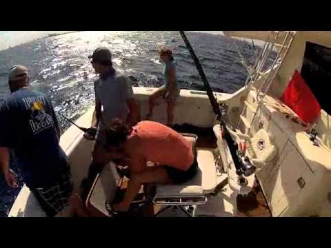 High Hook Fishing Charters LLC, Fort Lauderdale, FL 6/16/2012 Hammerhead Shark