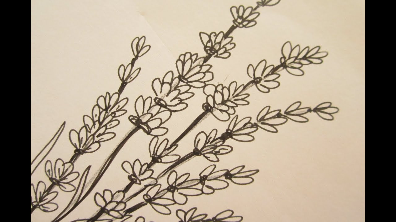 how to draw flowers draw lavender flowers youtube