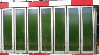 How Algae feed a House