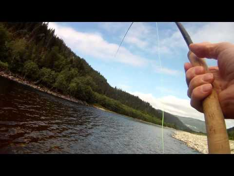 Gaula 2011 Salmon Norwegian Flyfishers Club 9,5 kg