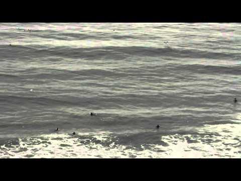 Bandada de aves en las playas de Lima