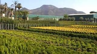Viveros Angol, c.b. - Empresa de Viveros para jardinería. Productores de plantas ornamentales.