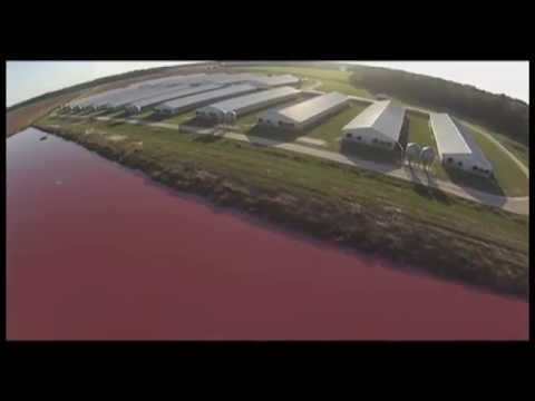 Spy Drones Expose Smithfield Foods Factory Farms video