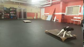 Dog Training | Recall from place to place with Roxie | Solid K9 Training Dog Training