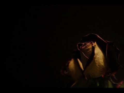 Heavenwood - Shadowflower