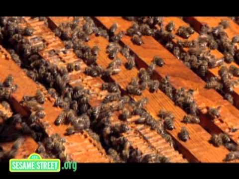 Sesame Street: Honeybee Hullaballoo