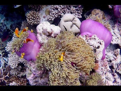 Maldive   The Movie   Maldives   Ari North   Maayafushi House Reef Snorkeling