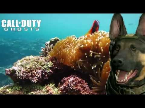 CALL OF DOGIES