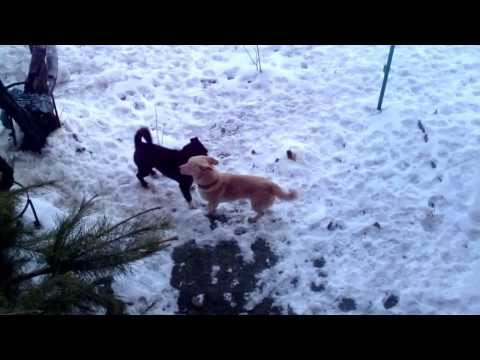 Amazing Gay Dogs video
