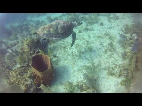 Florida Key's Scuba Diving and spearfishing