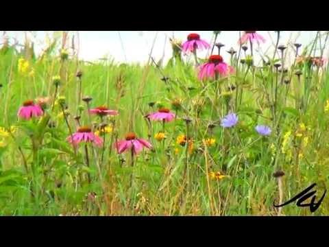 'Lets Go Places'  prt 2 - Nebraska to Kansas  - USA Travel -   YouTube