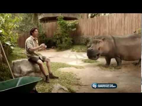 pub kitkat hippo bitbox