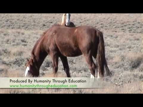 Calico, Nevada-Where Wild Horses Roam Video
