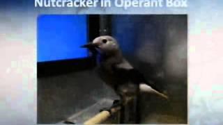 Nebraska Lecture: Bird Brain! Compliment or Insult, Alan C. Kamil