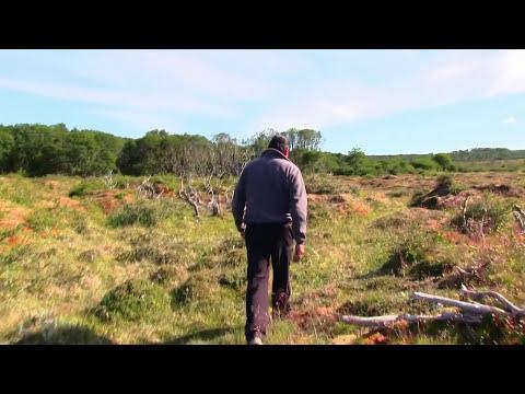 #46 Castores en Tierra del Fuego - Atlas Vivo de Chile