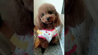 Look at these cute and funny puppies dogs 1660