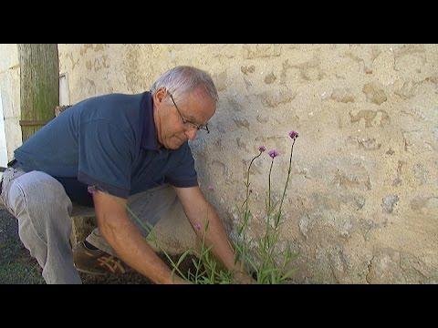 Luçon : plantations dans le quartier de Bourgneuf