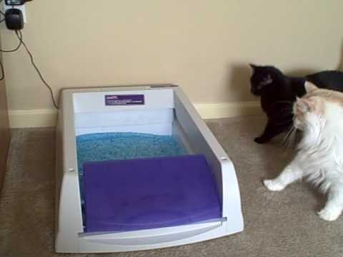 Cats stalk automatic litter box