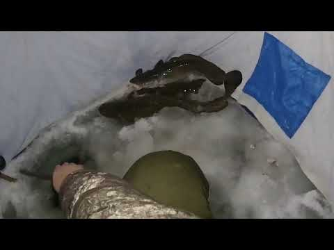 Зимняя рыбалка.Налим на зимнюю удочку.