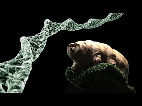 Pitch - Protecting human DNA agains radiation using genes from tardigrades