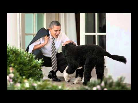 Barking for Barack