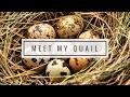 Meet My Quail!